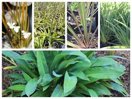 native nz plants nz native plants kiwi plants 2009 ltd kiwi plants 2009 ltd