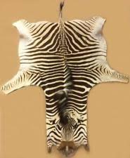 zebra skins african crafts market zebra hides 33 best animal
