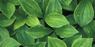 things your plant leaves are trying to tell you plant leaf