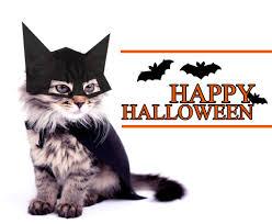 halloween vintage halloween images decorations incredible cat