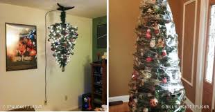 12 who found creative ways to pet proof their trees