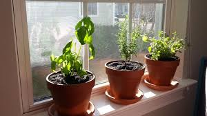 Window Sill Herb Garden Designs Lovable Window Sill Herb Garden Ideas With How To Create Your Own