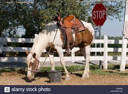 horse saddle paint horse saddle stock photos u0026 paint horse saddle stock images