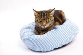 What Kills Bed Bugs And Their Eggs Bed Bug Treatment For Cats Pets