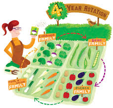 simple crop rotation for healthier plants microfarm organic