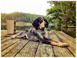 bluetick coonhound youtube lawlessness generallawlessness