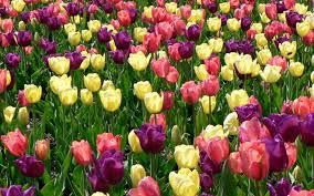 fresh images of spring flowers in garden 23205