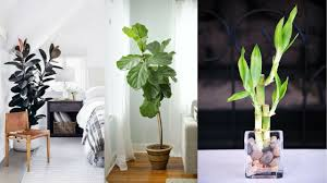 25 best houseplants that grow well for low light youtube