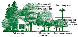 clearance tree removal overland park kansas