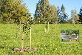 newly planted trees in your yard properly stake and support your