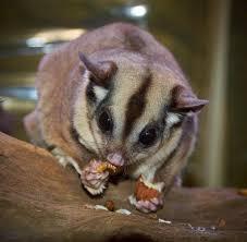 Wohnzimmer Bremen Silvester Wildtiere Für Zu Hause Warum Man Kein Eichhörnchen Aber Pumas