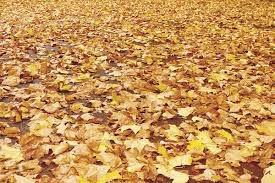 mulch leaf mold compost how to put autumn leaves to good use