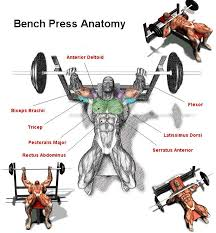 Ideal Bench Press Weight 6 Technique Points To Increase Bench Press Weight Gym Guider