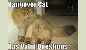 Drunk Cat Meme - meme night owl