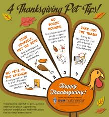 4 thanksgiving pet tips thanksgiving safety and infographics