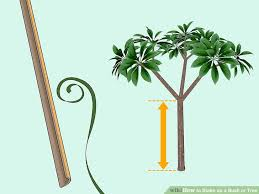 tree stakes 3 ways to stake up a bush or tree wikihow