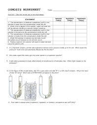facilitated diffusion worksheet worksheets