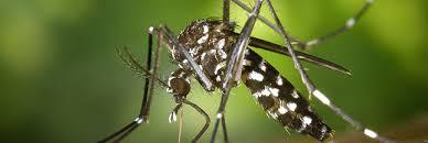 moustique dans ma chambre les répulsifs anti moustiques