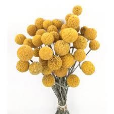 billy balls balls gold 2 oz bunch new harvest