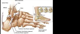 Lateral Collateral Ligament Ankle Ankle Fractures A Literature Review Of Current Treatment Methods
