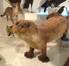 Taxidermy Fox Meme - taxidermy done so horrible it is beautiful album on imgur