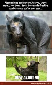 Hairless Bear Meme - a shaved bear funny how pinterest bears animal and random