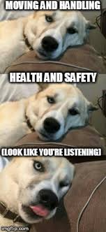 Health And Safety Meme - bored pun dog imgflip