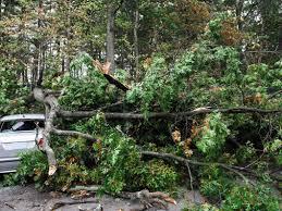 emergency removal winter garden orlando fl karney tree service