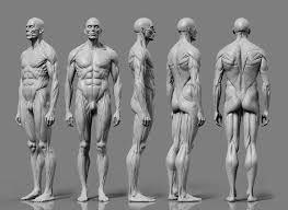 Human Male Anatomy 57 Best Men Anatomy Reference Images On Pinterest Anatomy
