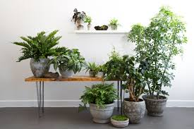 houseplants rent a houseplant the plant library delivers gardenista