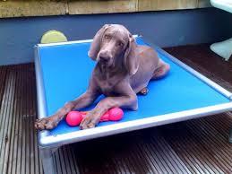 Petsmart Dog Bed Petsmart Dog Beds Cooling Bed Three Diy Dog Bed Home Design