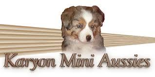south texas australian shepherd breeders mini toy aussie puppies sale sell akc miniature american shepherds