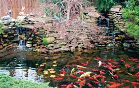 How To Make A Koi Pond In Your Backyard by Tips For Farm Pond Design In Your Backyard Countryside Network