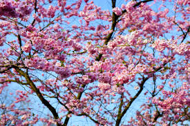 free images tree branch flower bloom produce pink