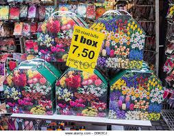 tulip bulbs for sale stock photos tulip bulbs for sale stock