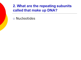 Dna Rna And Protein Synthesis Worksheet Dna Rna And Protein Synthesis Review Ppt