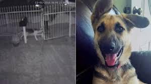 dogs stolen abc13 com