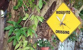 best mosquito repellent u2014 beat the sting