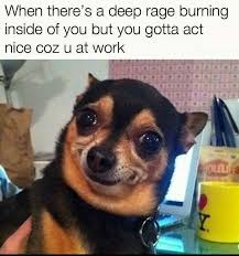 Chihuahua Meme - 20 adorable chihuahua meme sayingimages com