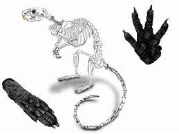 rat tattoo designs by psychowerewolf on deviantart