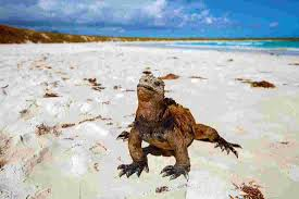 Iguana Island Ultimate Galapagos Central Islands Daphne Ecuador Tours