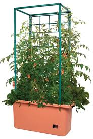 hydroponic systems not using traditional dirt medium