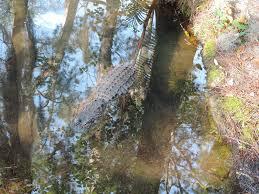 Okefenokee Swamp Map Okefenokee Swamp Forest In Florida Thousand Wonders
