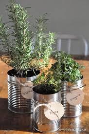 window herb gardens tin can herb garden fun for window sill indoor garden