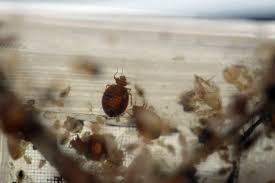 Bed Bugs New York City New Law Forces Nyc Landlords To Reveal If Buildings Have Bedbugs