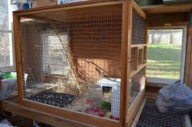 bob white quail backyard chickens