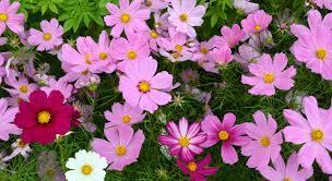 holasek flower power garden center lester prairie mn