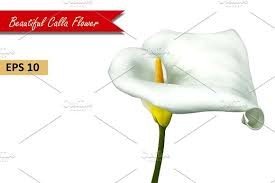 Calla Flower White Calla Lily Flower Vector Objects Creative Market