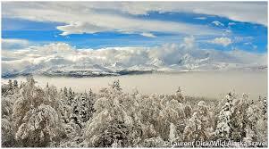 Alaska travel photography images Explore the magic of winter with wild alaska travel alaska365 jpg