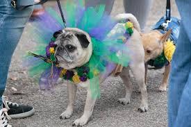 mardi gras dog photos third annual mardi gras dog parade at garden